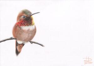 2020_6_Kolibri (2)